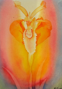 Light Iris