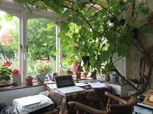 Grapevine Study – Photo by Becca Tarnas